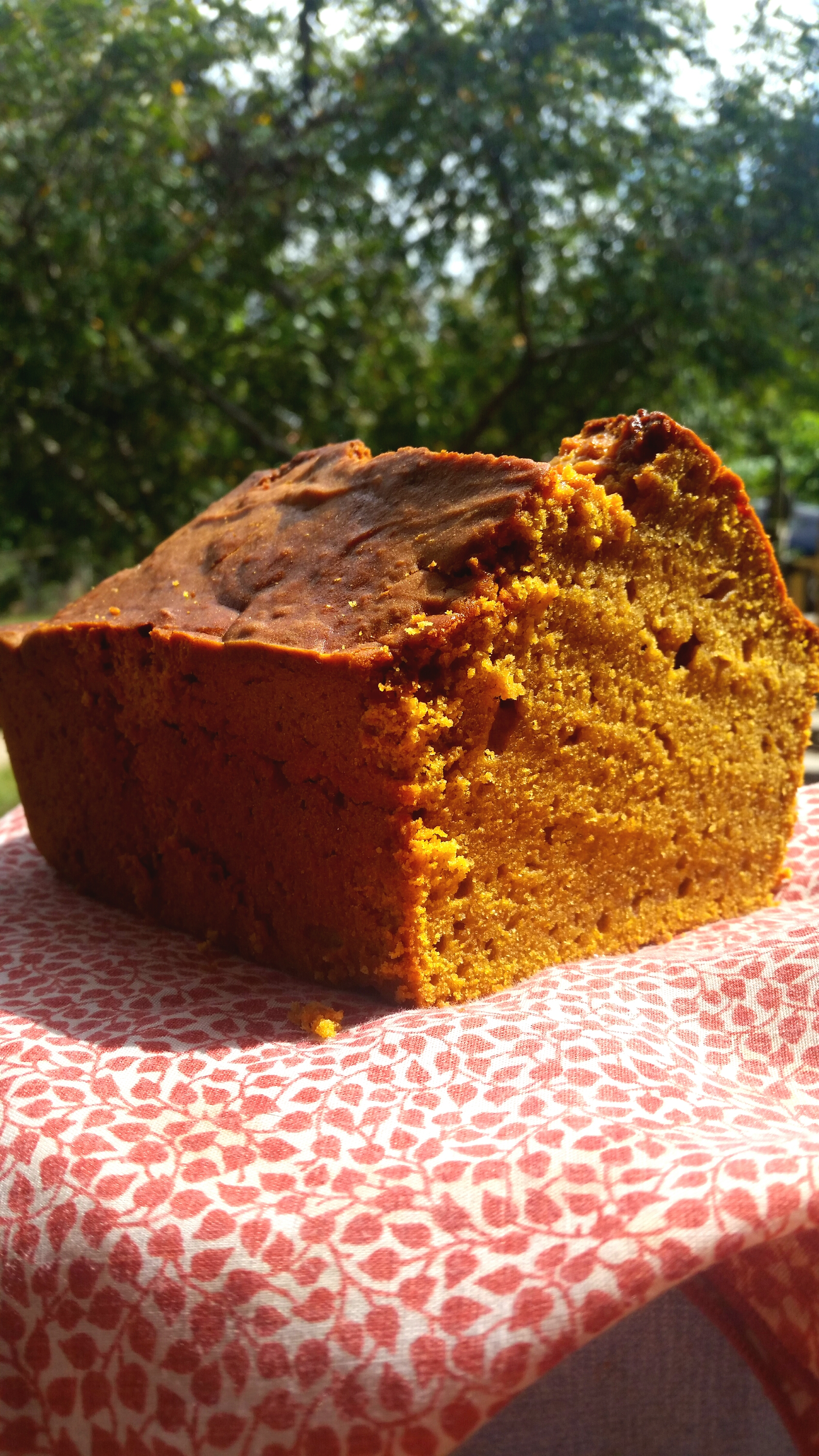 pumpkin bread in sunlight