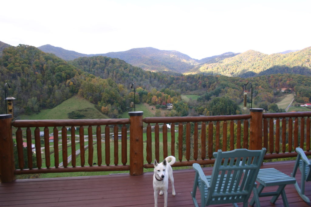 Blue chair and white dog on balcony or deck overlooking mountains, hills, valley.