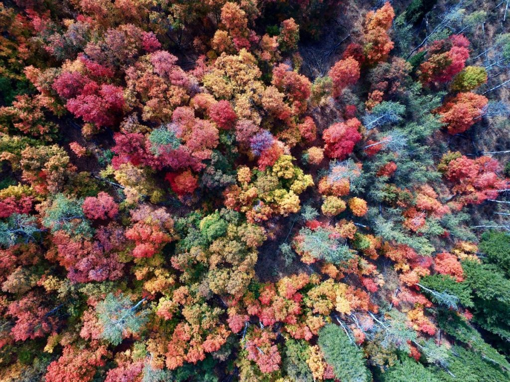 Aerial view of forest of trees in shades of red, gold, and green.