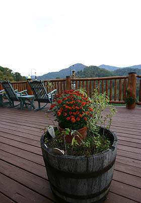 Mum in planter on deck