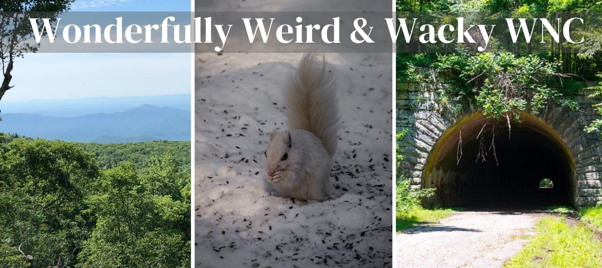 Grandfather Mountain, white squirrel and the road to nowhere in NC