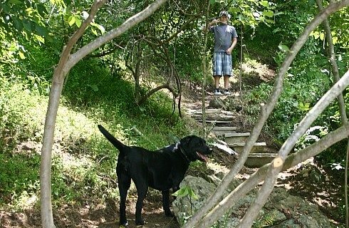 Man hiking along path with green trees in woods with black lab