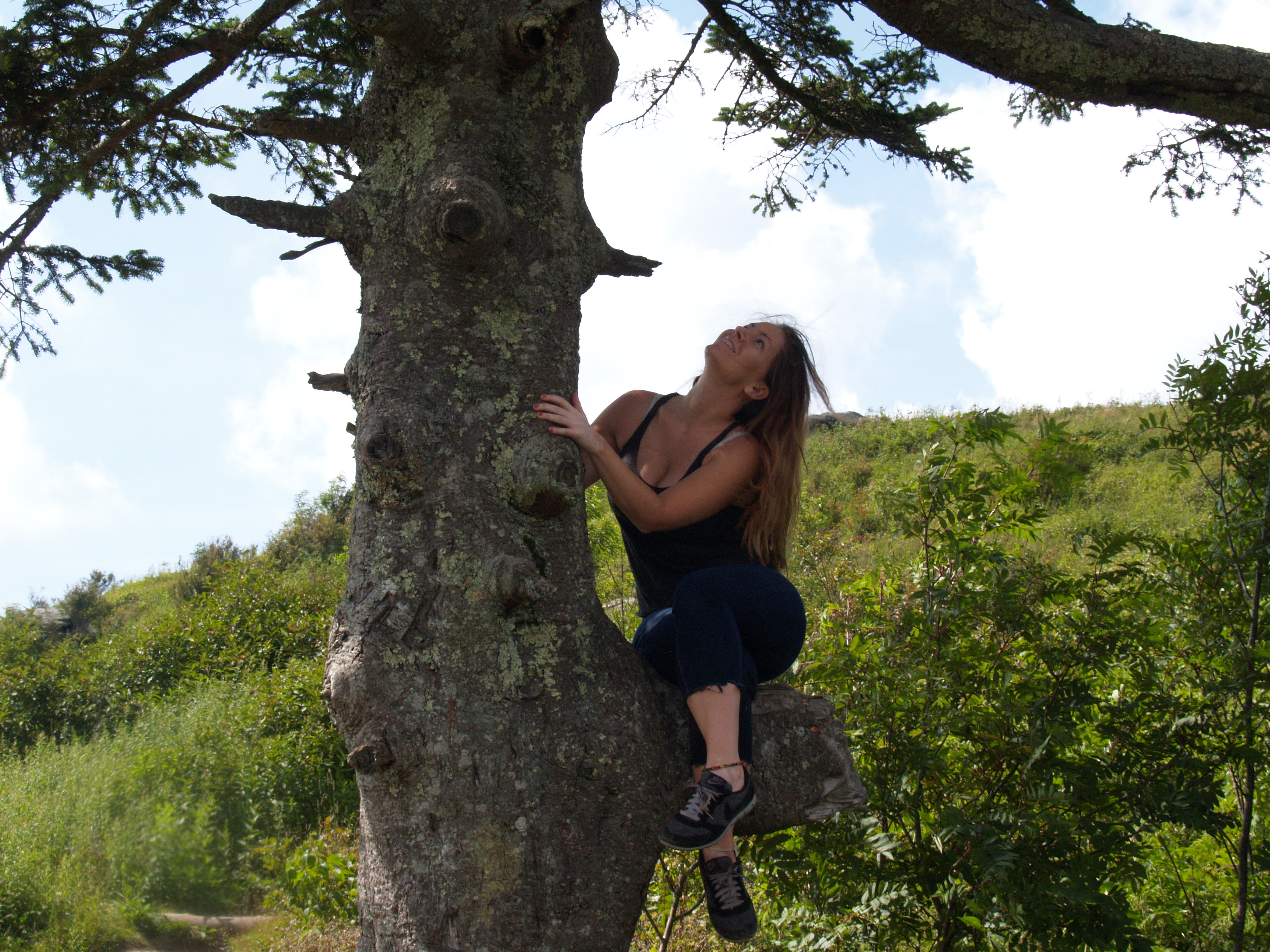 girl perched on evergreen
