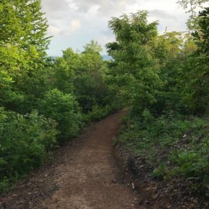 dirt trail hiking path in woods