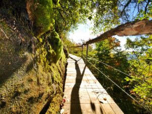 a beautiful woodland path with white rocks