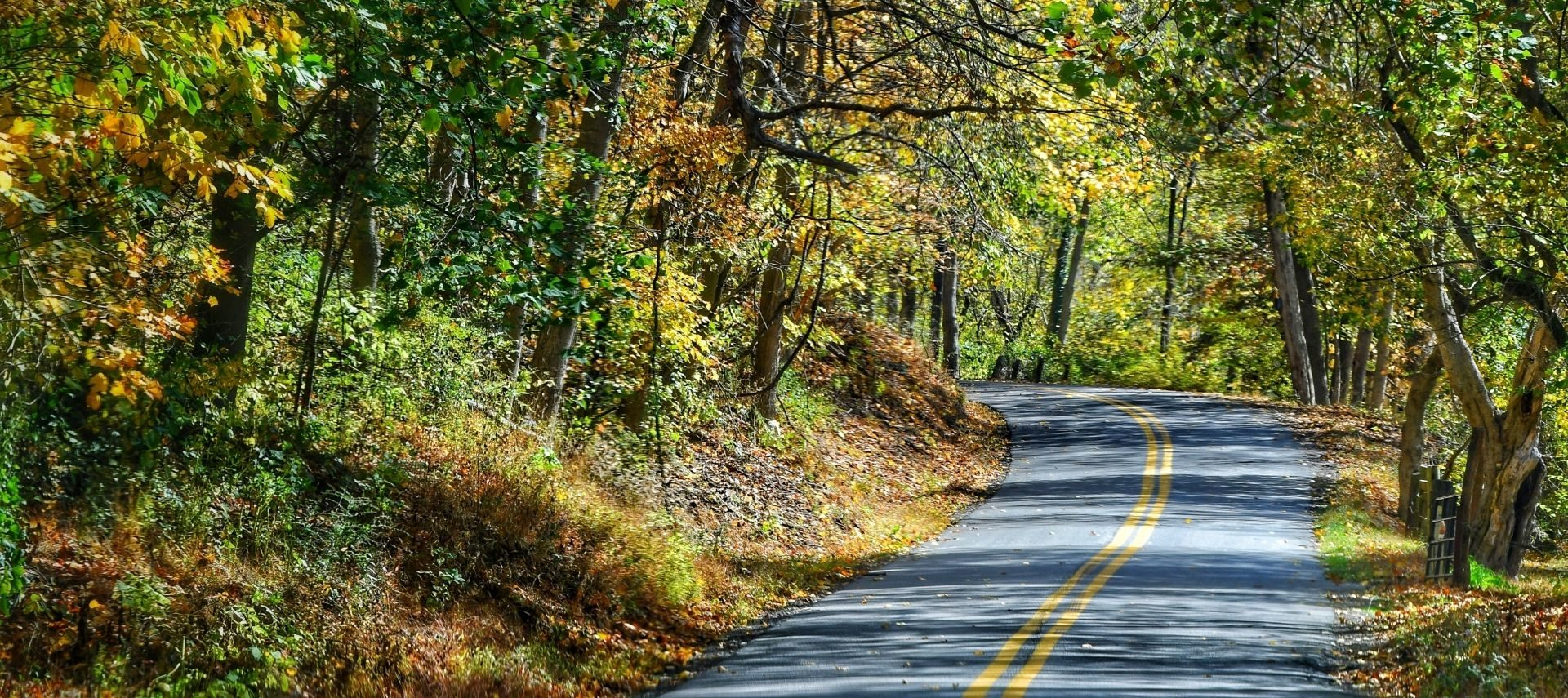 Winding road surrounded by colorful trees in the fall